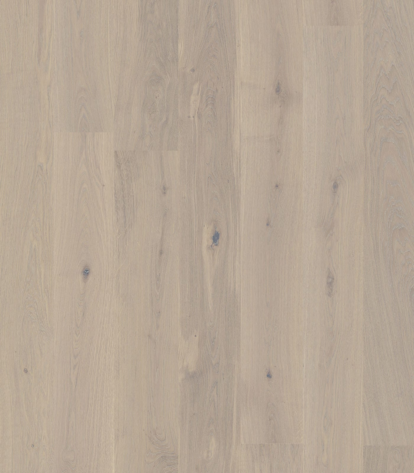 Limestone-Colors collection-European Oak Floors-flat