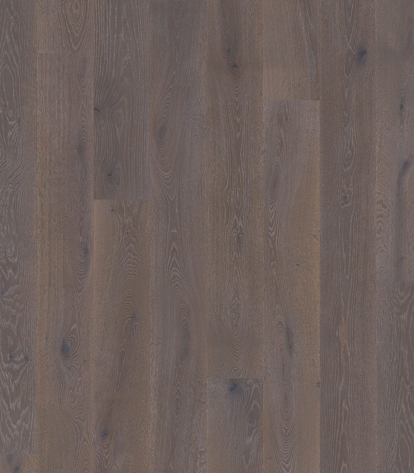 Tip Top Grey-Colors Collection-European Oak Floors-flat