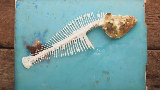 Herring fish skeleton on a blue background