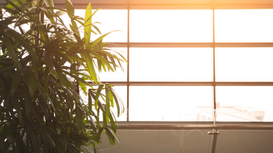 Bright sunlight streaming through a window and illuminating a plant